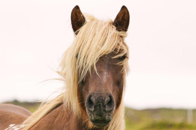 Writer In Malaysia: A horse