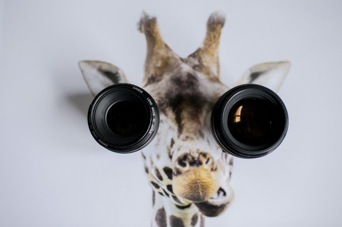 Giraffe picture with camera lenses as eyes