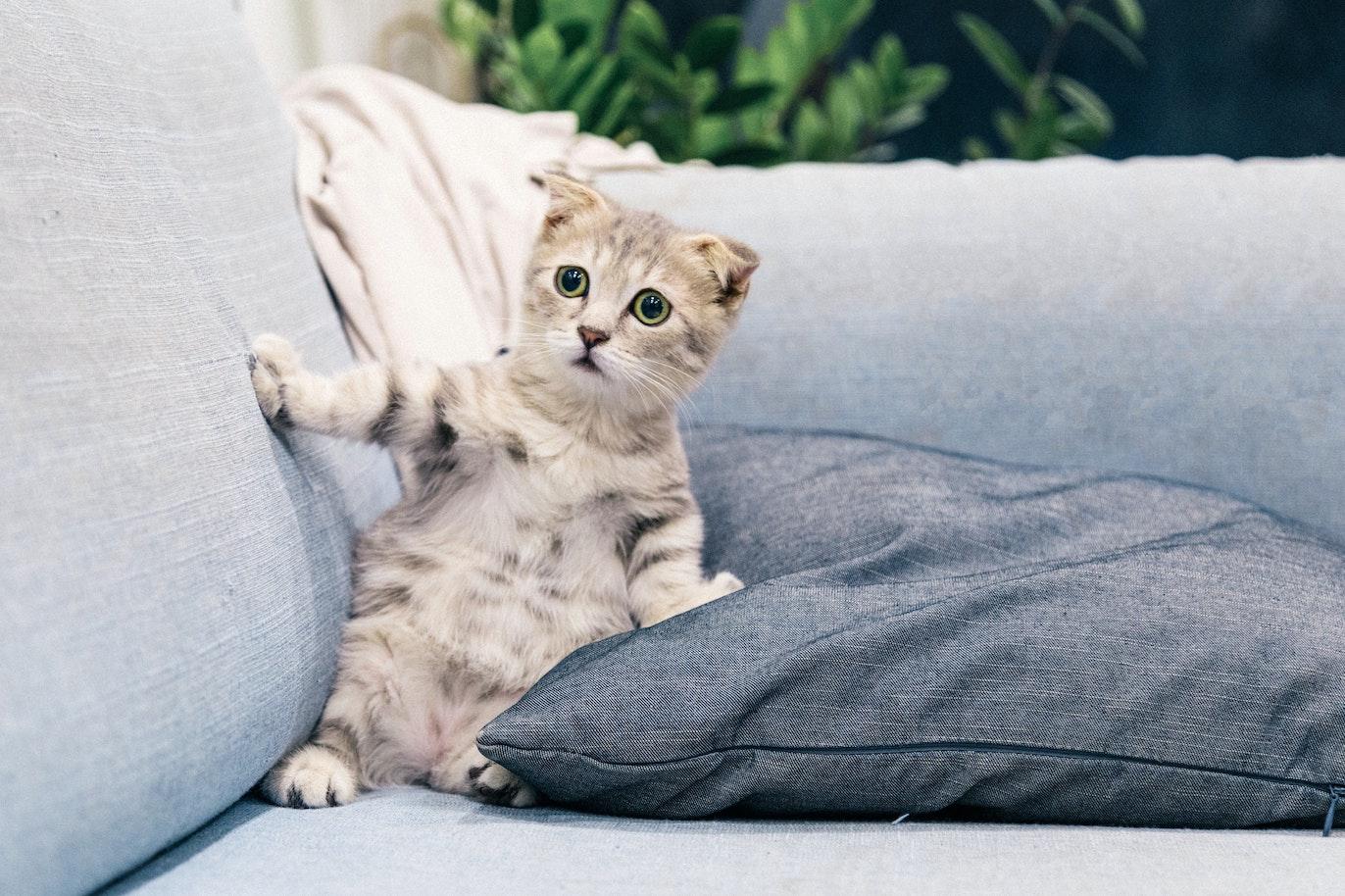 Kitten looking surprised