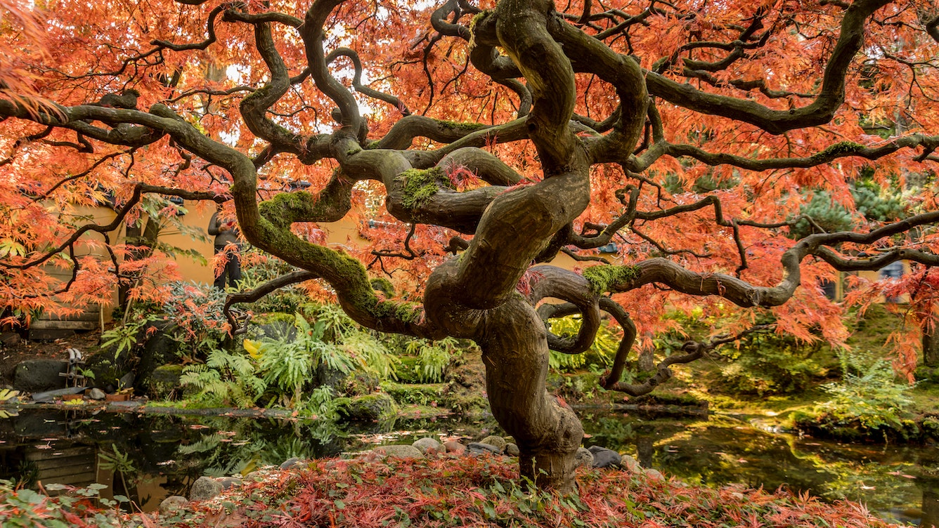 A bonsai-looking tree with orange autumn leaves